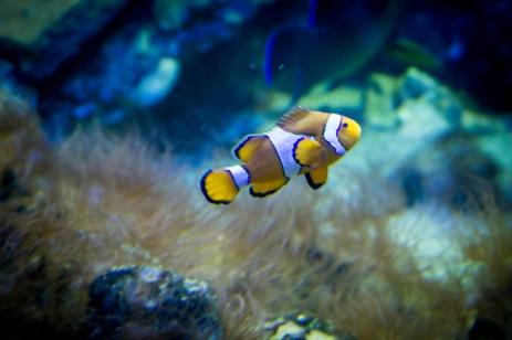 Acvariul din Galați